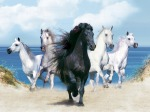 Black-horse-with-four-white-horses-near-the-sea-wallpaper