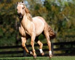 wallpapers-horses-2