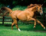wallpapers-horses